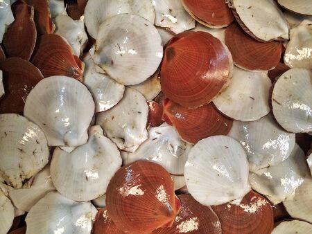scallops: Scallops Stock Photo