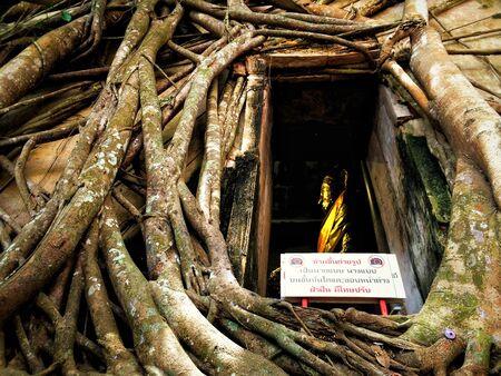 unseen: Wat Bang Kung, Banyan Tree Temple, Unseen Thailand, Amphawa Stock Photo