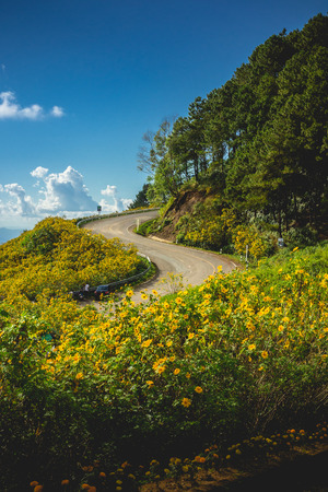 The road curves up the yellow mountain with Mexican Sunflower Weed Field in north of Thailand. hill beautiful. maze Landscape sunshine nature flower Tung Bua Tong Mexican sunflower in Mae Hong Son.