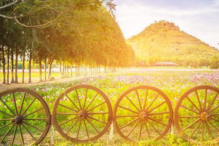 木製の車輪、大きな山ジム トンプソン農場、タイで松の木の背景とピンクのコスモス畑の美しい景色。ソフト フォーカス。 写真素材