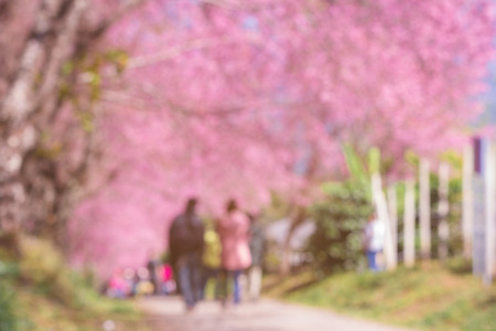 Blurred of Crowd walking & watching blooming cherry blossom(Sakura) in the park. Pink blossoms on the branch with blue sky during spring blooming. Branch of pink sakura blossoms.