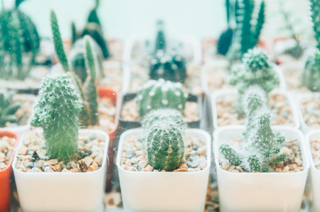 Collection of various cactus in different pots. Potted cactus house plants on  white background.succulent plants Stock fotó