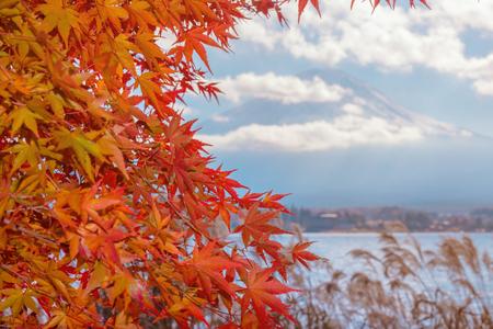 Colorful autumn season & Mountain Fuji in morning fog and red leaves at lake Kawaguchiko, JapanMountain Fuji with colorful red maple leaves from Kawaguchi Lake - Yamanashi, Japan