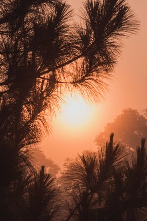 Landscape with foggy hills and trees in winter at sunrise. Misty morning golden sunrise, vintage film style. View of Morning Mist at doi angkhang Mountain, Chiang Mai, Thailand