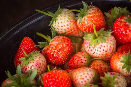 Fresh harvest strawberries background.Fresh organic strawberry
