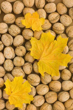 autumn backgrounds photo