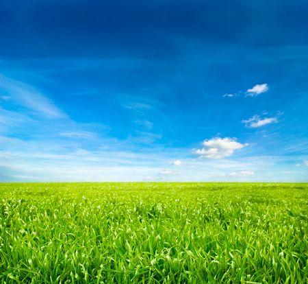 lea: background of cloudy sky and grass