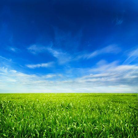 曇り空と草の背景 写真素材