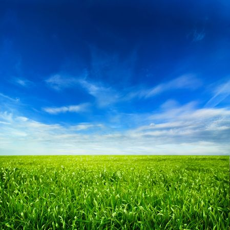 wheat fields: background of cloudy sky and grass