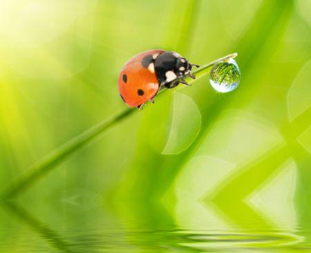 kropla deszczu: Ladybug siedział na zielony listek