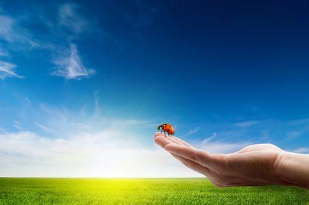 mariquitas: Ladybird en mano sobre paisaje idílico