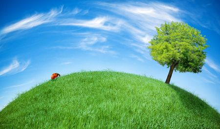 earth globe covered with grass Stock Photo - 6630664