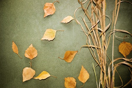 grunge background with dry leaves Standard-Bild