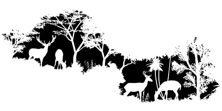 black shadows: animal of wildlife (deer)