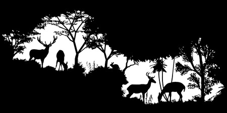 animal of wildlife (deer)