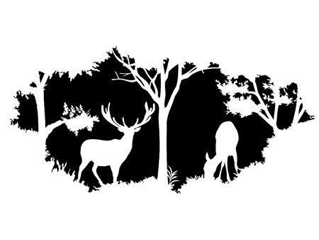 forest background: animal of wildlife (deer)