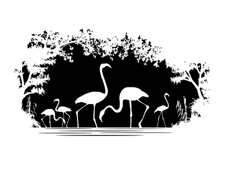 wildlife: Animal of wildlife (flamingo)