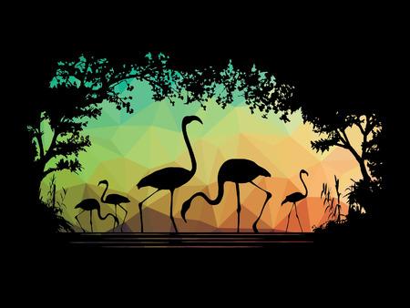 wildlife: Animal of wildlife (flamingo)