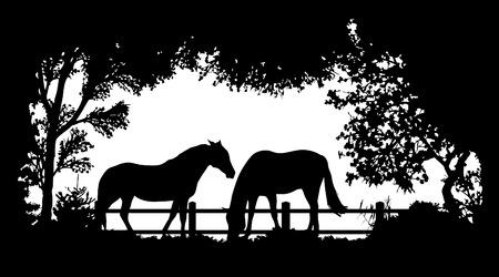 savanna: Animal of wildlife (horse) Illustration