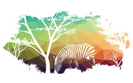 animal of wildlife (zebra)