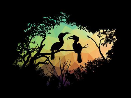 hornbill: animal of wildlife (Hornbill)