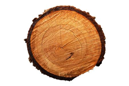 bark texture: Tree annual ring (Die cutting)