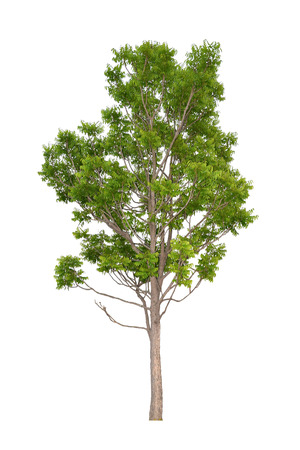 neem tree (Die cutting)