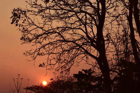 Evening Backlight tree photo