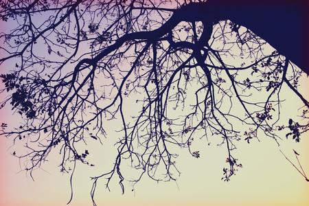 branch (Wilderness retro style) photo