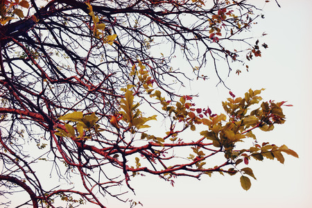 tree branch (Retro Filters style) photo