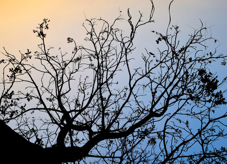 Backlit trees and branches on evening time photo
