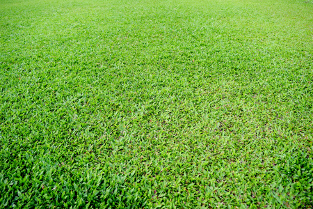 soccer pitch: Green grass soccer pitch