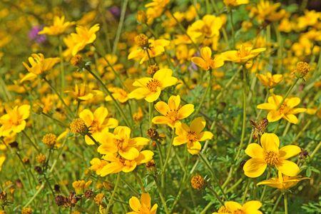 natue: Beautiful fresh vibrant Autumn Fall wild flower scene