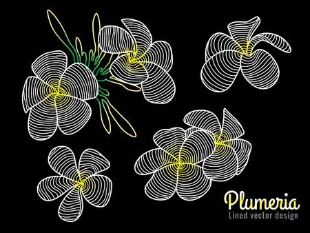 plumeria flower: Abstract vector art lined design white yellow Plumeria flower Illustration