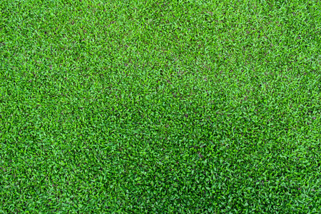 sports backgrounds: fresh spring green grass texture for background Stock Photo