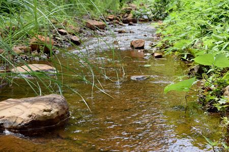 wasatch: River stream in a forest. Beautiful summer landscape.