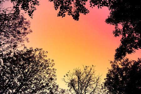 iluminado a contraluz: Árboles retroiluminados y sucursales en estilo retro para Fondo abstracto.
