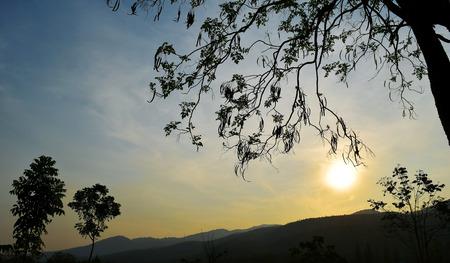 iluminado a contraluz: Ramas de árboles a contraluz y el cielo del atardecer sobre el tiempo de la tarde