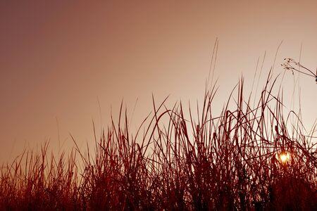 iluminado a contraluz: hierba iluminación de fondo y la luz del cielo del sol, estilo retro Foto de archivo