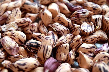 monkey nut: Close up groundnut or monkey nut or peanut