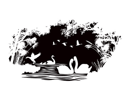 black and white image drawing: animals of wildlife Swan vector abstract design Illustration