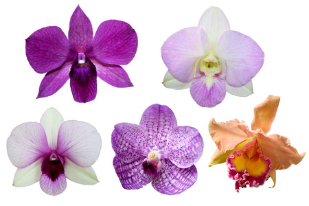 5 Orchid flower isolate on white background