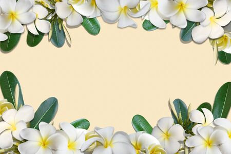 lei: Frangipani flowers and leaf frame on old soft paper background Stock Photo