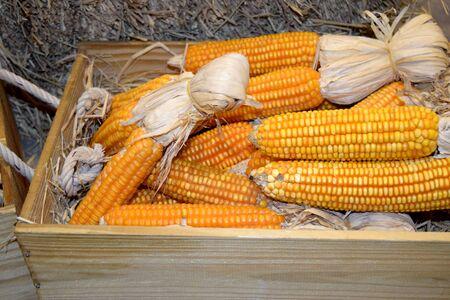 corn flower: Yellow orange corn for animals in wood box