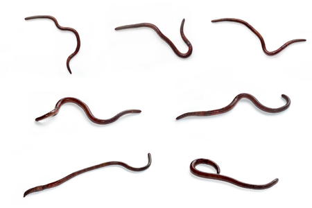 wiggler: Earthworm is a tube-shaped set isolate on white background