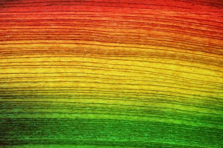 reggae: Fond jaune de bois rouge de style Reggae Vert Banque d'images