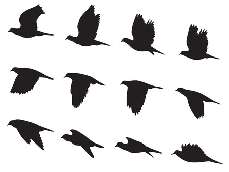 flying: Silhouette Pigeons bird flying motion