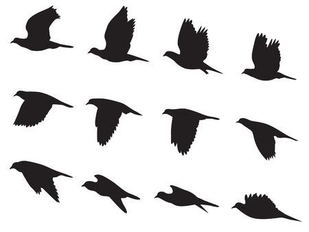 palomas volando: Silueta de palomas volando de movimiento de aves