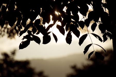 feuille arbre: Close up Feuille Contre-jour Silhouette et Montagne