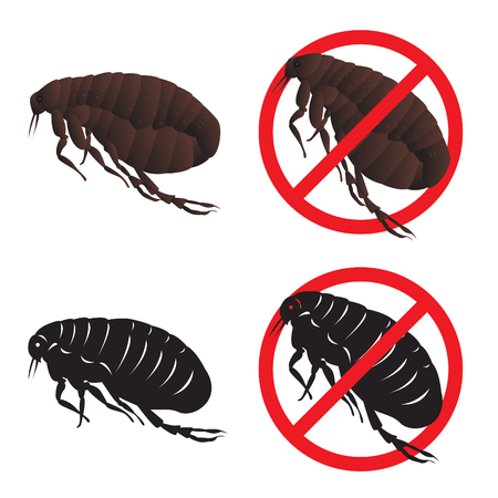 head louse: Cootie and Stop cootie sign symbols vector design Illustration